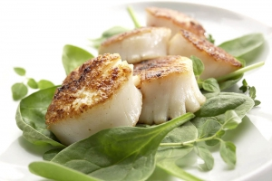 food photography scallops