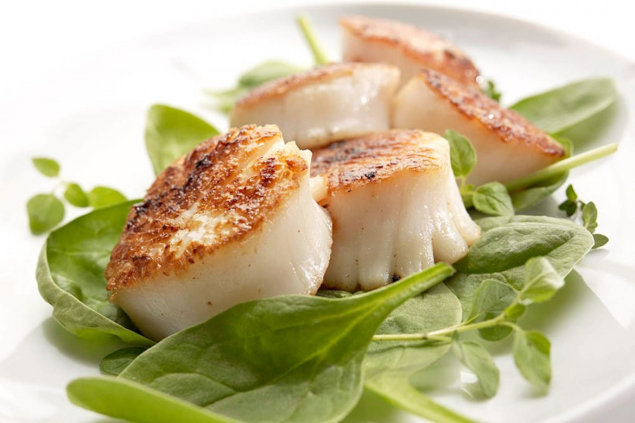 food photography of scallops